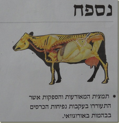 2011-01-09 Treif Cow 032