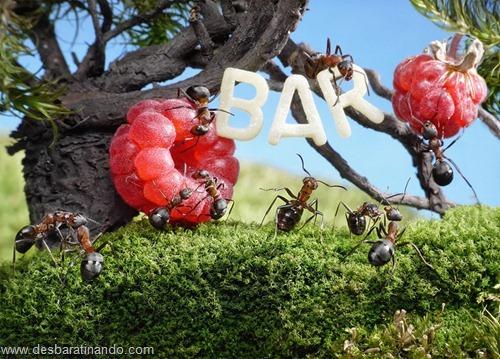 formigas inacreditaveis incriveis desbaratinando  (59)