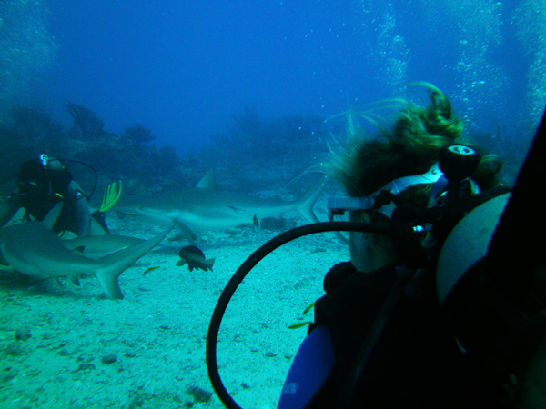 St martin diving with sharks