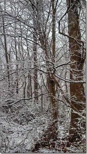 Snow 02 (8)