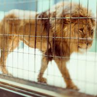 Thumbnail image for Берлінський зоопарк