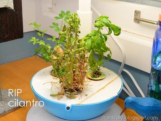 RIP cilantro