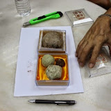 写真4 :ヤマアラシの胃石 (撮影: 市川 哲)