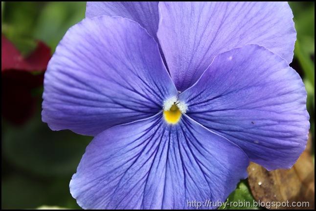 Flower_1a