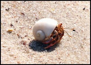17d - Hermit Crab