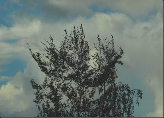 tuuli märkä ikkuna 005