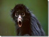 shocked-monkey