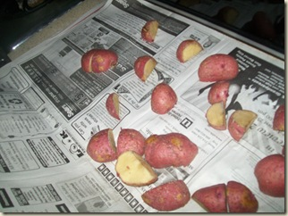 FALL POTATOES 009