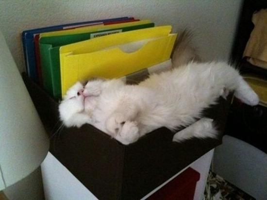 gatos durmiendo (6)