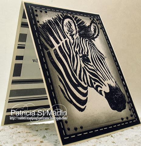 Gentle Zebra 2013  r