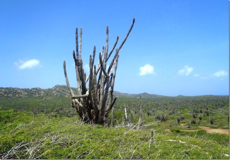 022g einzelner kaktus