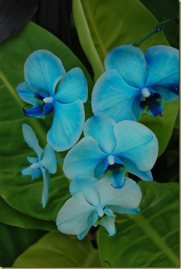 6 - Flowers Blue