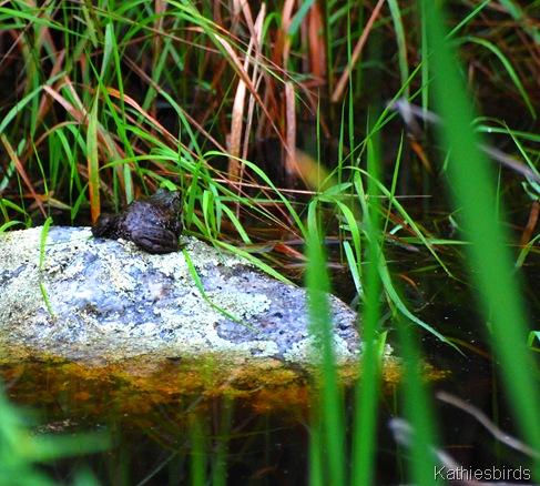 4. frog-kab