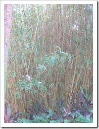 Florida vacation Epcot bamboo plants