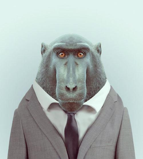 animais roupas humanas - macaco