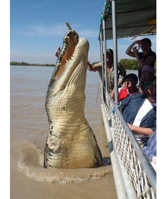 crocodile_1944005i