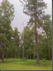 2012-06-16 15.17.06_450x600
