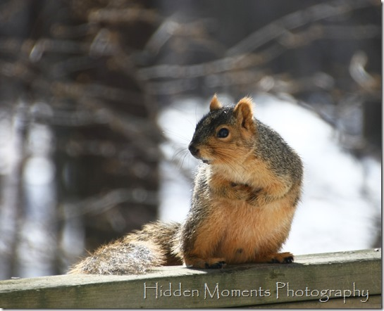 Day 65 - Beady, Squirrely Eyes On You.
