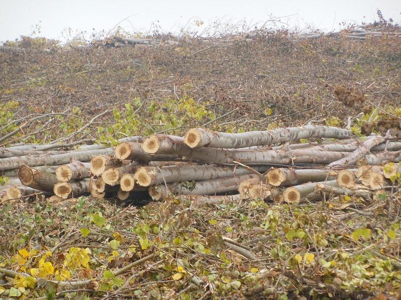 boardman-tree-farm-4