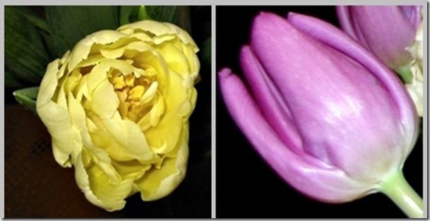 tulipmontasje