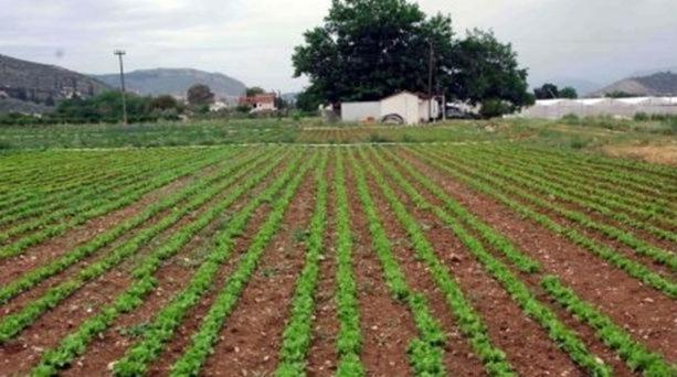 Δωρεάν παραχώρηση καλλιεργήσιμης γης σε ανέργους από την Γεωργική Σχολή «Παναγή Βαλλιάνου»