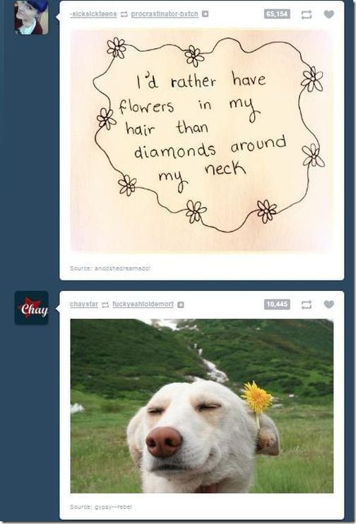 tumblr-funny-comments-19