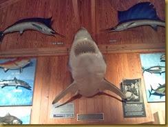 226 shark wall