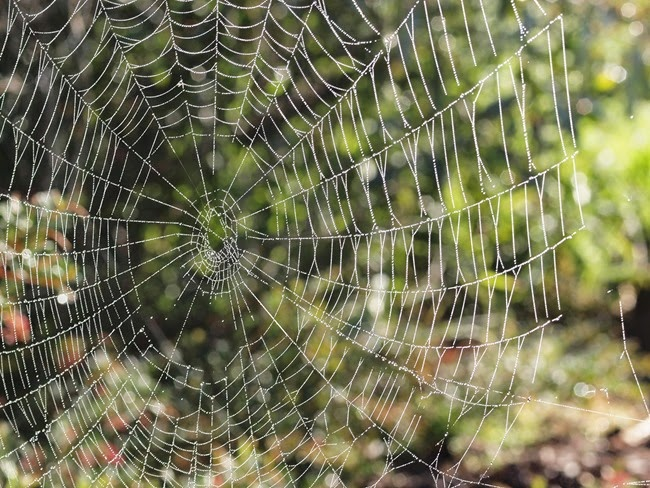 virtù - a web in the garden