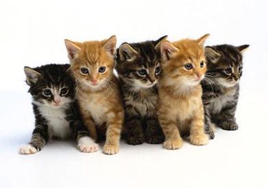 gattini-frasi