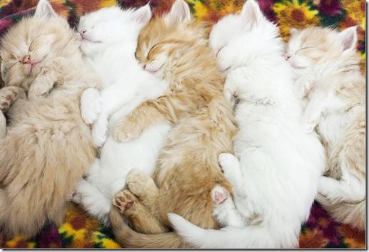 kittens sleeping in a row