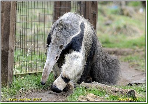 Cotswold Wildlife Park D800 X  01-04-2013 13-24-042