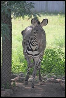 Zoo5 074