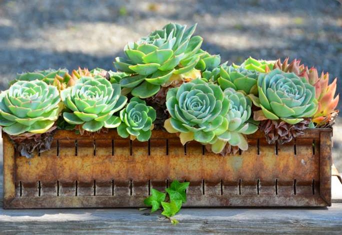 succulent 1150255_640502409302083_904571211_n chestnut & vine floral design