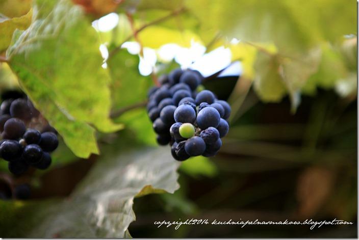 lody winogronowe (1)