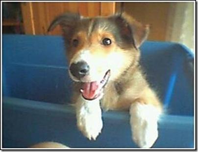 Animal cãoengraçado (4)