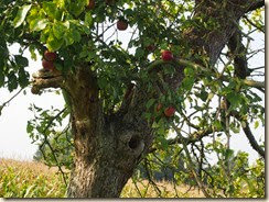 Een eekhoorntje verbergt zich in de boom