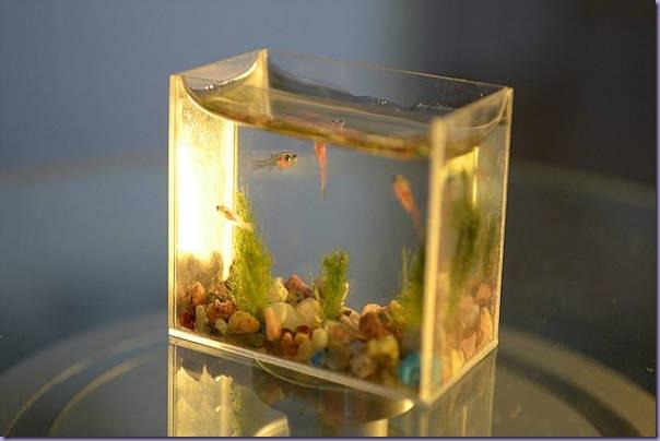 Menor-Aquário-Mundo-Peixes