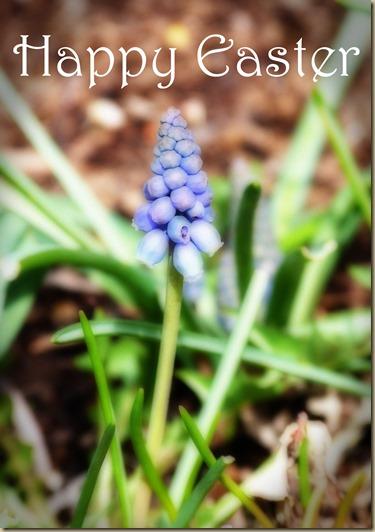 Easter Muscari