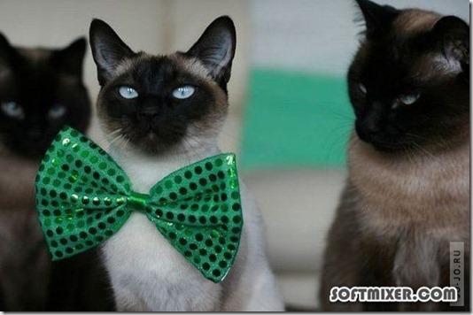 1305905587_funny_animals_70