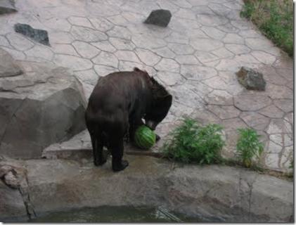 bear melon 2