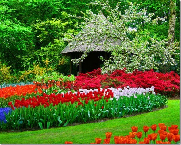 flores-facebook-tumblr-rosas-las flores-fotos de flores-753