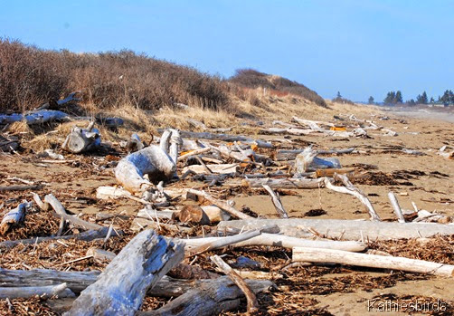 19. beach bones-kab
