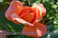 7   - Glória Ishizaka - Rosas do Jardim Botânico Nagai - Osaka