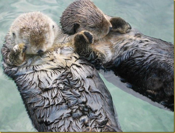 Sea-Otters-Holding-Hands-634x475