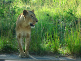 South Africa - 094.JPG