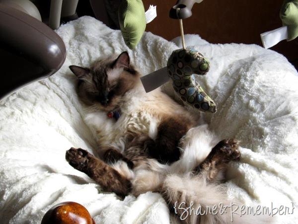 catinswing2