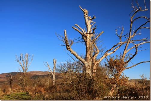 53-dead-trees