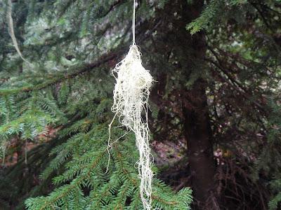 lichen2.JPG