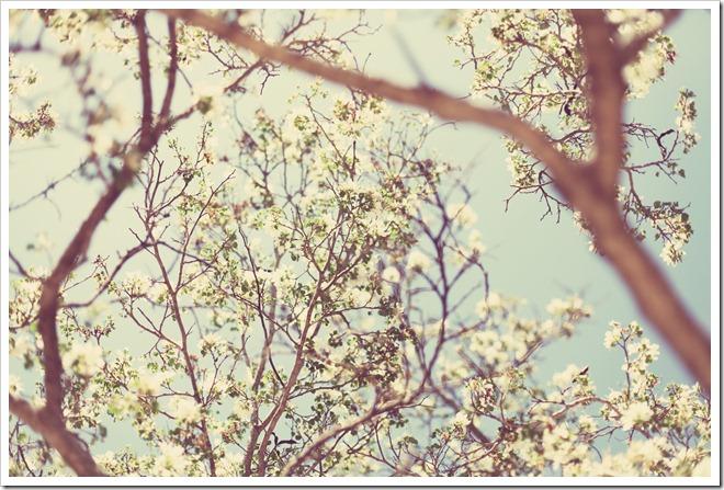 Wildflower Center Apr 2 039-1_edited-1