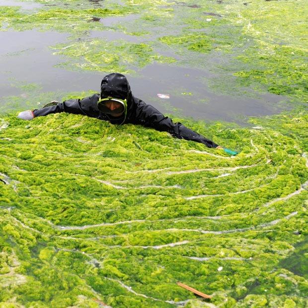 chinese-algae15